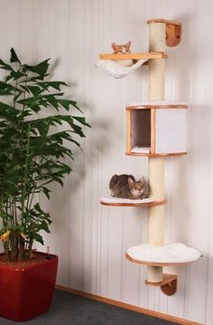 The UK's leading online retailer of wall mounted cat tree, ceiling bridges and ladders. View our exclusive range of wall mounted cat trees today. Sisal, Cat Tree Designs, Animal Gato, Empty Wall Spaces, Cornish Rex, Cat Room, Cat Condo, Outdoor Cats, Pet Furniture