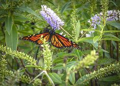 Online Contest - The Last of the Butterflies - Fine Art America