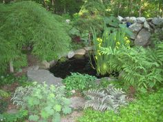The little pond in spring
