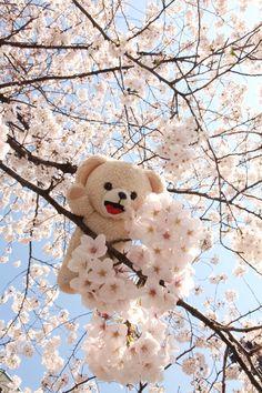 Teddy loves spring and flowery trees! Huge Teddy Bears, Giant Teddy Bear, Snuggle Bear, Teady Bear, Teddy Girl, Teddy Bear Pictures, Bear Girl, Bear Wallpaper, Tatty Teddy
