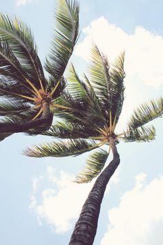 Palm trees, blue skies