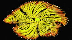 This is a picture of a bacterial community taken by Eshel Ben-Jacob