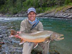 yfh Atlantic Salmon, Trout, Fish, Salmon