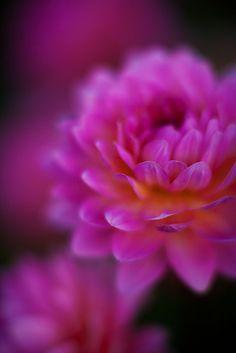 Petals Dream ~ Photo by Mike Reid