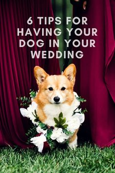 Wedding Photography Ideas on how to have your dog in your wedding! Dogs in weddings are my favorite thing. :) - Advice for having your dog in your wedding by adventure wedding and elopement photographer Jen Dz Dog Wedding, Wedding Guest Book, Wedding Tips, Wedding Events, Dream Wedding, Budget Wedding, Spring Wedding, Wedding Hair, Wedding Reception