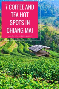 Chiang Mai, Thailand can be overwhelming to even the most well-traveled coffee (and tea) enthusiasts, so here are the 7 must-visit coffee cafes in the city. Click to read more or pin and save for later.