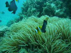 Vanuatu underwater life!
