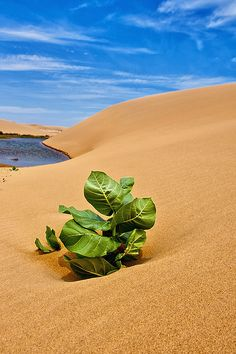 The Sahara desert is the hottest desert. It covers most of Africa. The Sahara desert is the size of the U.S.