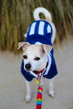 National Dress Up Your Pet Day with HotDogCollars.com + Zukes Lil' Links Review | HAPPY HAZEL