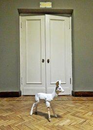 sarna , www.dolceluce.org , deer