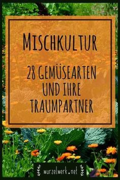 28 Gemüsearten und ihre wirksamsten Mischkultur-Partner + Beispielplan – Wurzelwerk Mixed culture in the vegetable garden: 28 effective mixed culture combinations for garden or raised bed. The ultimate mixed culture table for tomatoes, herbs and Co. Garden Types, Diy Garden Projects, Diy Garden Decor, Garden Care, Garden Beds, Rockery Garden, Box Garden, Party Garden, Organic Gardening