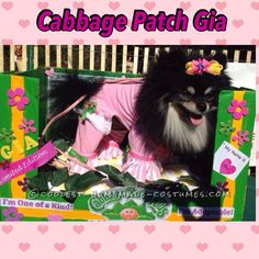 Cabbage Patch Dog Costume for a Cute Pomeranian... Coolest Halloween Costume Contest