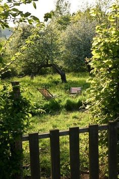 Orchard behind the barn
