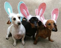 Are we too late for the Easter Bunny try-outs?