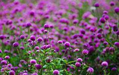 фиолетовые цветы: 21 тыс изображений найдено в Яндекс.Картинках