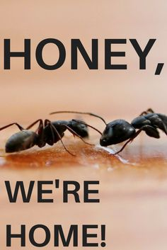 56 best Ants images on Pinterest | Ant, Ants and Ant types