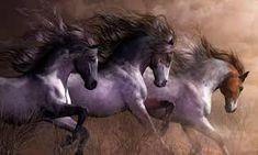 Resultado de imagen para tropilla de caballos caminando