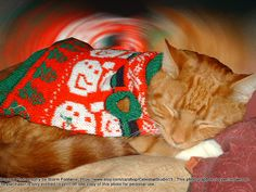 This is a photograph of a sleeping cat all by Kittens, Cats, Last Minute Gifts, Coupon, Sleep, Photography, Animals, Gatos, Animales