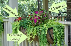 Best Plants for Hanging Baskets; Once you have the planters installed on the porch railing and filled with soil it is time to add the best plants for hanging baskets. My favorites are geraniums, coleus, and creeping jenny. Hanging Plants, Diy Container Gardening, Plants, Plants For Hanging Baskets, Porch Flowers, Cool Plants, Porch Planters, Hanging Baskets, Container Gardening Vegetables