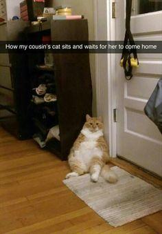#fatcat