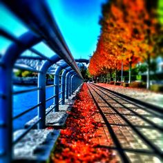 The colours of fall in Vancouver, BC  iphoneography by NikNaz K.