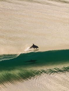 Two of the best surfers in the world share a family wave. Dolphins having fun at Tweed Heads, Australia - by Brodie McCabe. AMAZING!