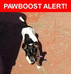 Is this your lost pet? Found in Watsonville, CA 95076. Please spread the word so we can find the owner!  Black and white. Purple collar.  Nearest Address: Near Trembley Ln & Fletcher Ct