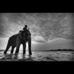 Elephant King ~Malcolm Fackender
