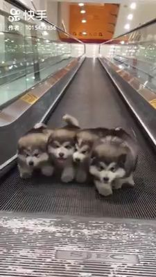 fluffy dogs doing exercise 😂❤️ Cute Funny Animals, Cute Baby Animals, Animals And Pets, Cute Cats, Funny Pets, Cute Animal Videos, Cute Animal Pictures, Dog Pictures, Really Cute Puppies