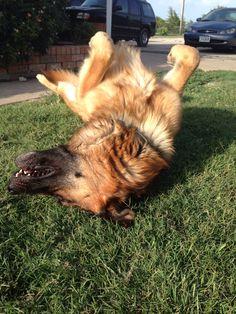 Rolling in the grass ~Zahn