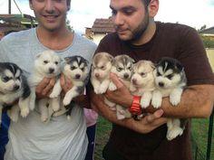 Puppies ...