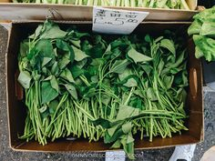 An introduction to Chinese greens, how they look like, how to store, how to prep and cook with them, and related recipes. Vegetable Base Recipe, Chinese Greens, Base Foods, Plant Based, Herbs, Healthy Recipes, Vegetables, Potatoes, Cooking