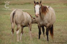 AQHA Grulla Mares | Shining C Grulla Horses