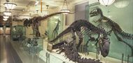 Museum of Natural History -- have to see the dinosaurs!