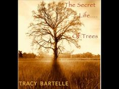 """THE SECRET LIFE OF TREES"" RELAX and CHILL OUT to 75 mins of music by film composer Tracy Bartelle"