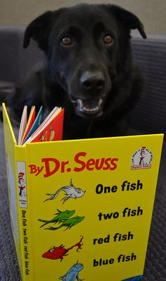 We've asked our staff and patrons to share photos of their reading pets. Buster keeps track of the fishes while reading Dr. Seuss.