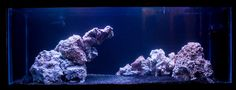 20 gallon nano reef - Google Search