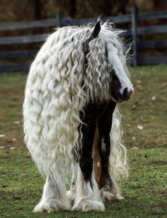 These horse breeds all have an amazing hair! Enjoy getting to know some of the world's most beautiful horse breeds, along with some facts. Most Beautiful Horses, All The Pretty Horses, Animals Beautiful, Animals Amazing, Beautiful Creatures, Animals And Pets, Funny Animals, Cute Animals, Exotic Animals