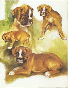 Boxer Pups by Rien Poortvliet 1983 colour by OLDBOOKSMAPSPRINTS, £8.00
