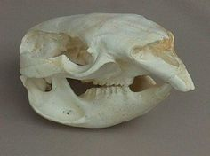 52 Best animal bones/ zooarchae images in 2017 | Animal