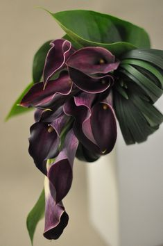 Simple but gorgeous and sophisticated, contemporary shaped bouquet of deep plum calla lilies and looped, tropical foliage.
