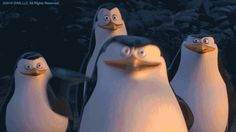 The perfect Madagscar Penguins HighFive Animated GIF for your conversation. Discover and Share the best GIFs on Tenor. High Five Gif, Dreamworks, Penguin Day, Dog Feeder, Penguins, The Originals, Funny Gifs, Childhood, Walls