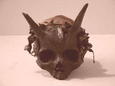 This skull was discovered in France between 1920 and 1940. Its easily one of the more disputed and controversial artifacts of its time. The museum of supernatural history claims (through analysis) that the horns are in fact, naturally a part of the skull.