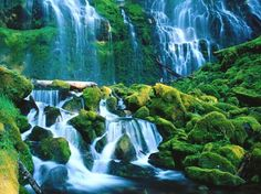 Wilamette National Forest, OR.... in Highschool I found this picture... .and i haadd to paint it... <3