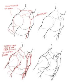 Anatomy tips || feredir.tumblr.com