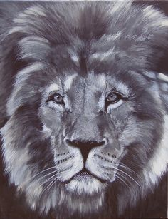 His Majesty - Lion - Limited Edition Mounted A3 print of beautiful lion's head by HeathersPortraits on Etsy