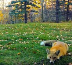 18 Fuzzy Foxes Who Will Make You Feel Way Better About Winter