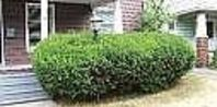 How to Remove Bushes From the Garden | eHow.com