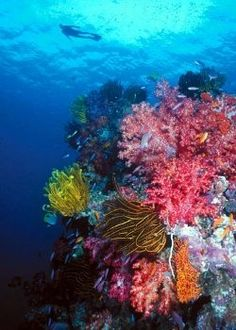 Coral reef Fiji Underwater Creatures, Underwater Life, Poisson Mandarin, Photos Sous-marines, Life Under The Sea, Soft Corals, All Nature, Sea World, Underwater Photography