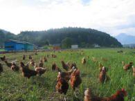 Animal Welfare, Animales